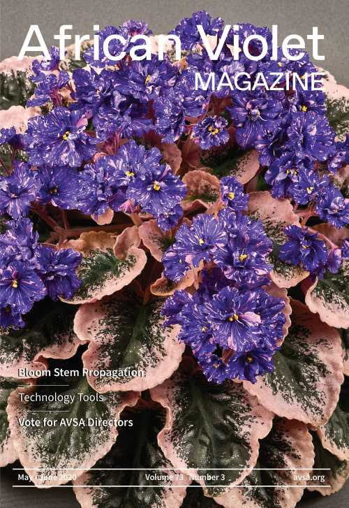 Cover of May/June 2020 African Violet Magazine