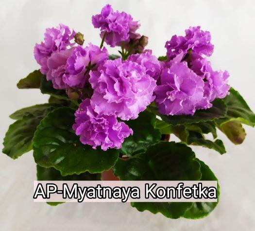 AP-Myatnaya Konfetka