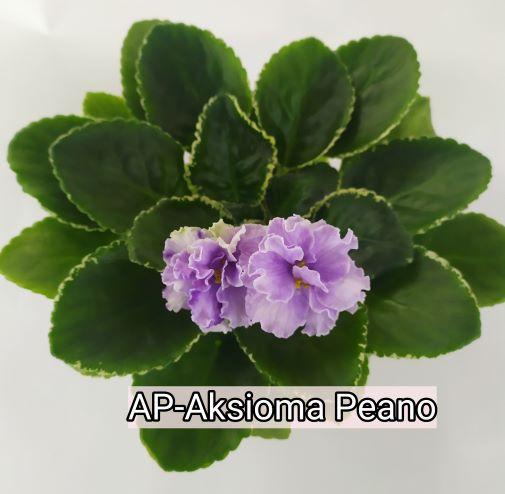 AP-Aksioma Peano