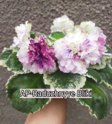 AP-Raduzhnyye Bliki